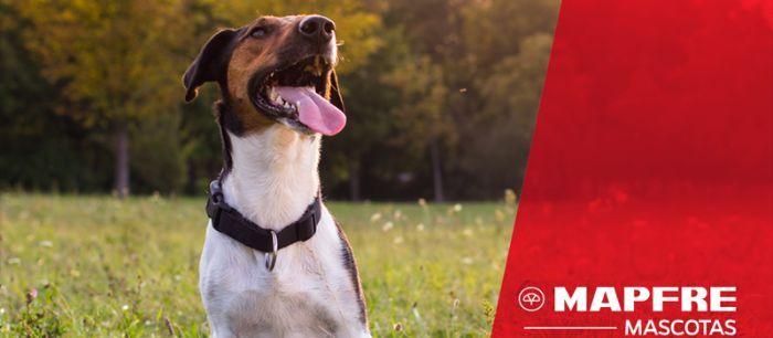 Mapfre seguro mascotas