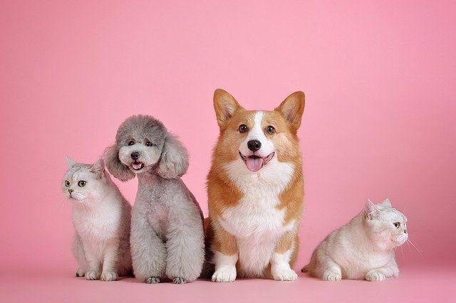 Caser seguro mascotas