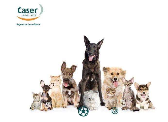 seguro mascotas caser