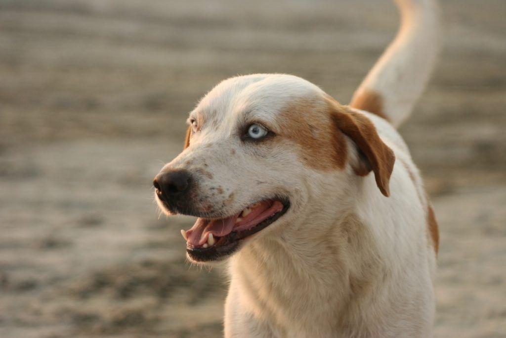 Qué es el seguro responsabilidad civil perros
