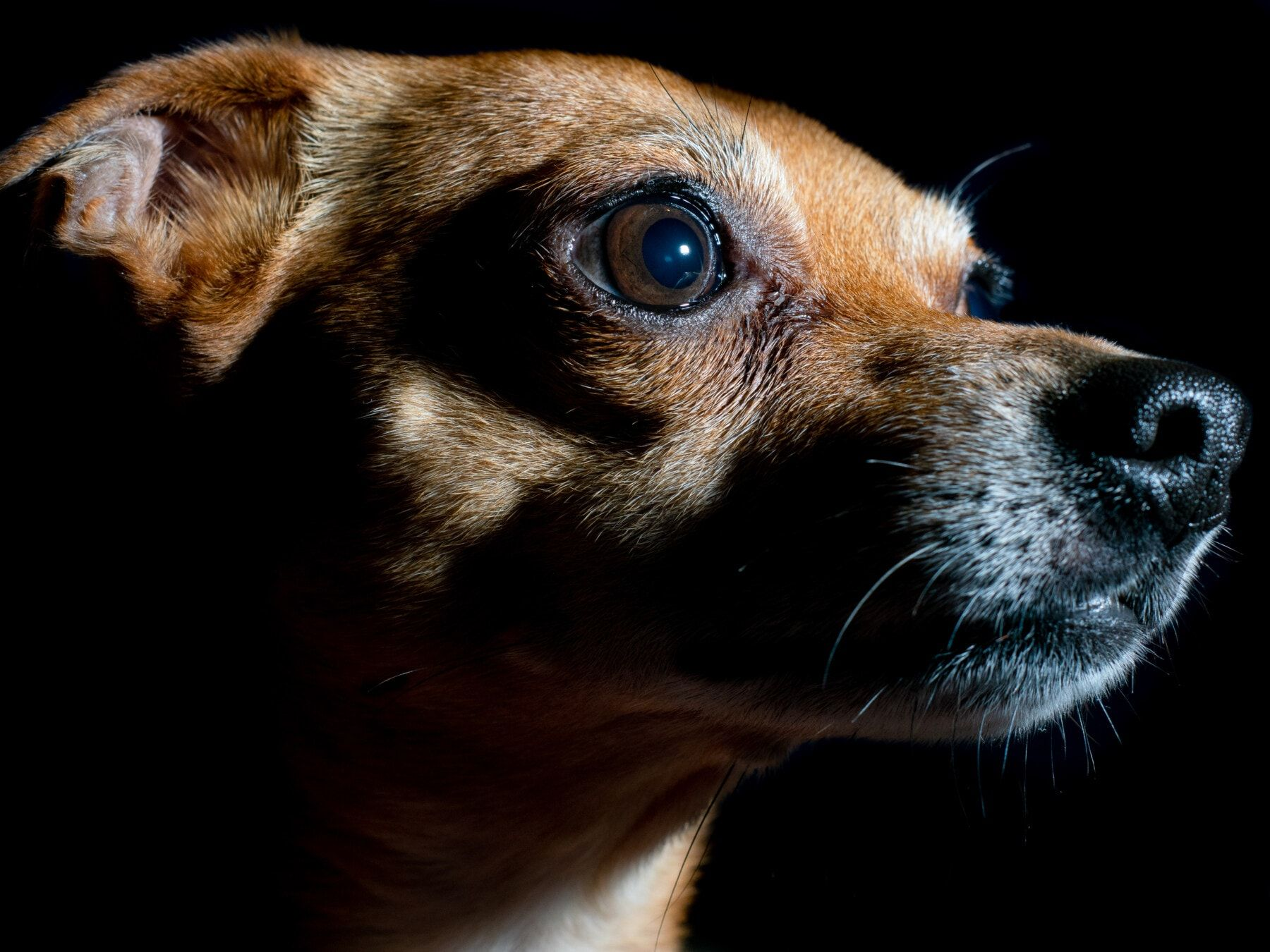 seguro responsabilidad Civil perros